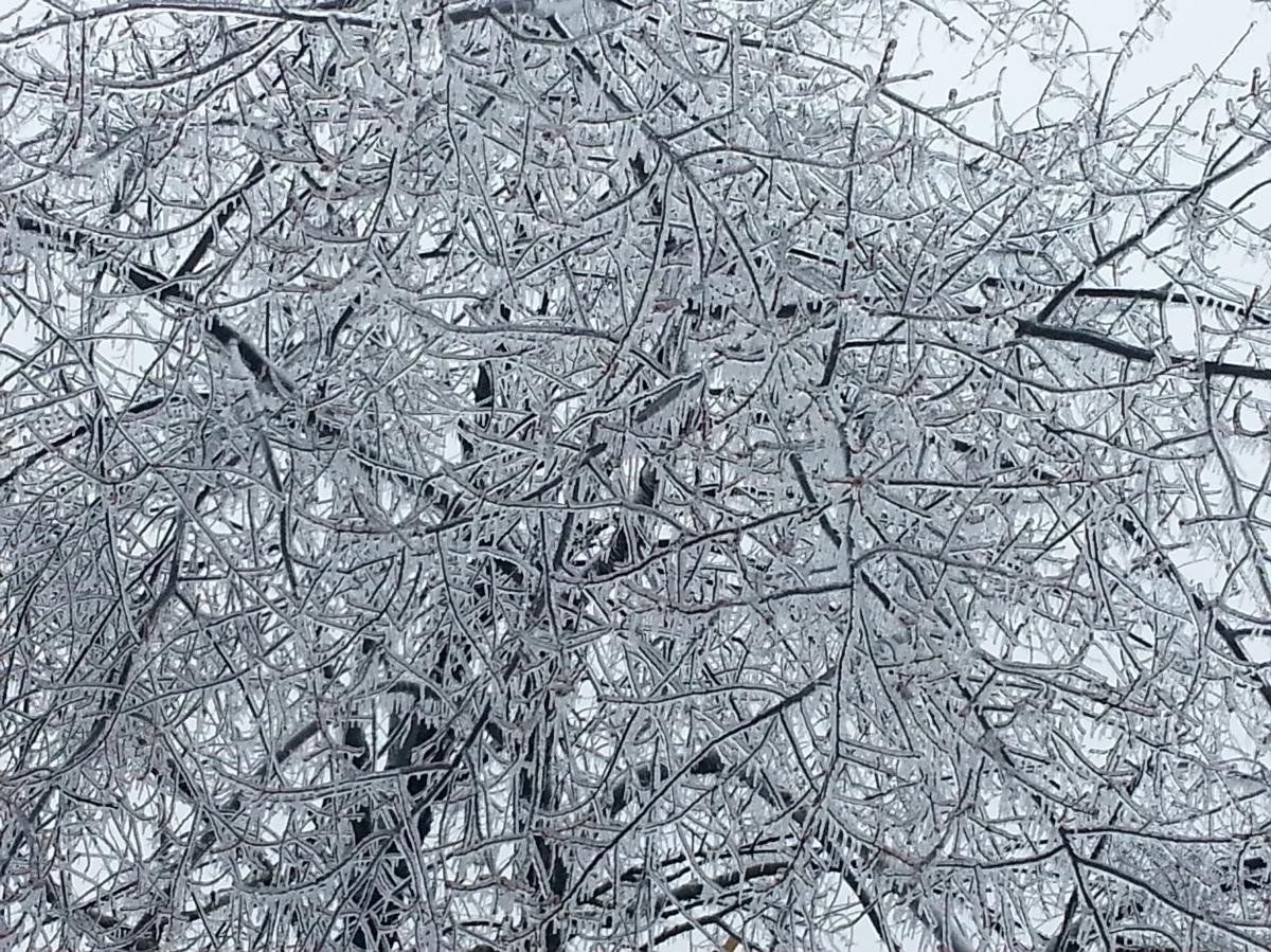 Ice And Sunlight